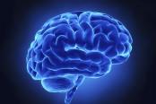 人脑工程概念股