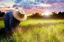 国务院发文推进农村一二三产业融合发展