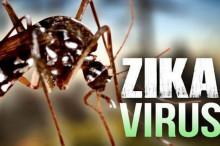 寨卡病毒肆虐哥伦比亚 逾3万人感染