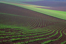 高层关注黑龙江农业发展