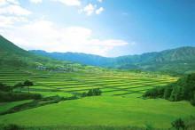 农业部汇聚科技资本等力量推进发展现代种业
