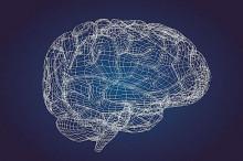 美国发布迄今最精确人类大脑图谱