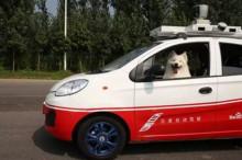 百度让两条狗参加了一次驾照考试