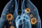 新型冠状病毒概念股